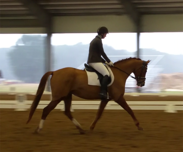 Viva's Diamond W - 2010 Hanoverian/CWB Mare ($30,000 and Under)