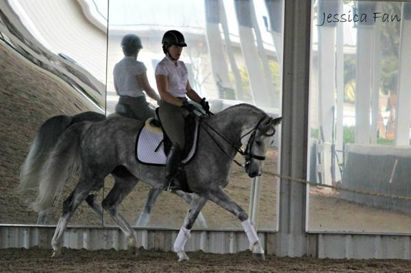 Vogue - 2006 Swedish Warmblood Mare ($30,000 and Under)