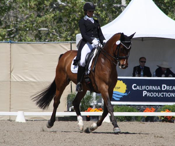 Wendigo - 2002 Bavarian Warmblood Gelding ($50,000 - $75,000)