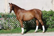 Whistle - 2003 KWPN Gelding - ($75,000 - $100,000)