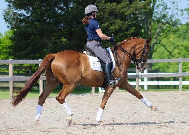 Whizard - 2002 ISR Oldenburg Gelding ($75,000 - $100,000)