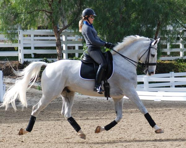 Whizz - 2003 Oldenburg Gelding ($100,000 and Up)