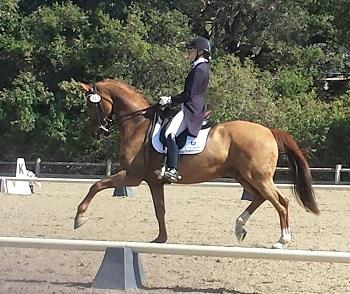 Woodstock - 2003 KWPNN Gelding ($100,000 and Up)