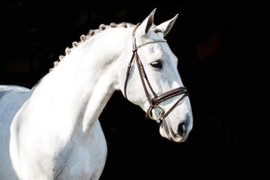 Xenophon - 2008 Andalusian PRE Gelding ($50,000 - $75,000)