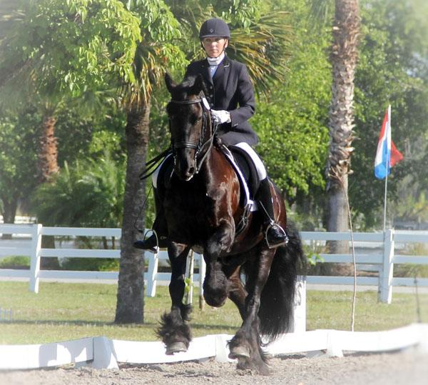 Youke of High Meadows - 2007 Friesian Gelding ($100,000 and Up)