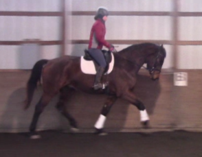 Zhezanne - 2014 Oldenburg GOV Gelding ($50,000 - $75,000)