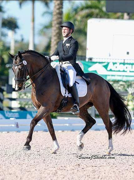 Zon Primaire - 2004 KWPN Gelding ($100,000 and Up)