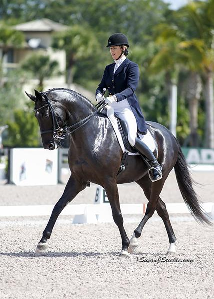 Zonnerhall O - 2004 KWPN Gelding - ($100,000 and Up)