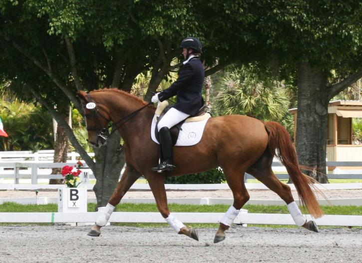 Ellie Rawle and Wyatt WF<br />2014 White Fences Grand Prix