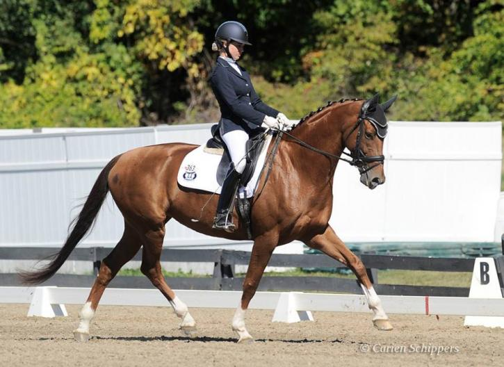 TotaComfort bridle as modeled by Frivaldi, ridden by Mary Bahnuik Lauritsen(Photo: Carien Schippers)