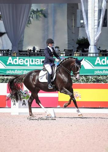 The 2018 AGDF season will feature two CPEDI 3* competitions and seven CDIs as riders look to qualify for the FEI World Equestrian Games™ Tryon 2018 to be hosted in September of 2018.