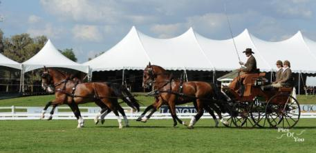Chester Weber during the 4-in-hand competition