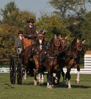 Chester Weber, Hermitage Classic CDE 2015, Driving, USA