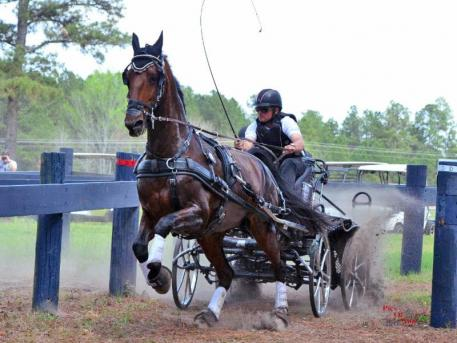 Jacob Arnold from Snow Camp, N.C., driving Uminco, Leslie Berndl's 17-year-old Royal Dutch Warmblood gelding