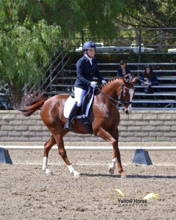 CDS Horse of the Year champions, Adult Amateur, Fourth Level, Karen Nocket, Ken's Kitten, USDF Region 7, CDS Championship Show
