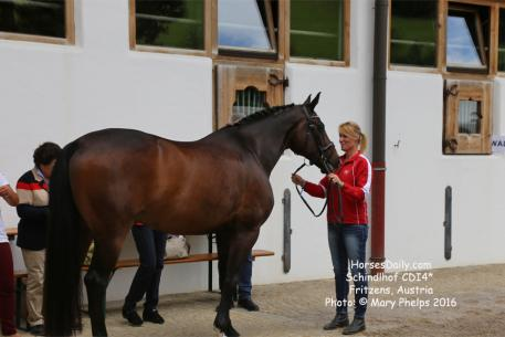 Karen Pavicic (CAN) and Don Daiquiri, Oldenburg gelding by Don Cardinale