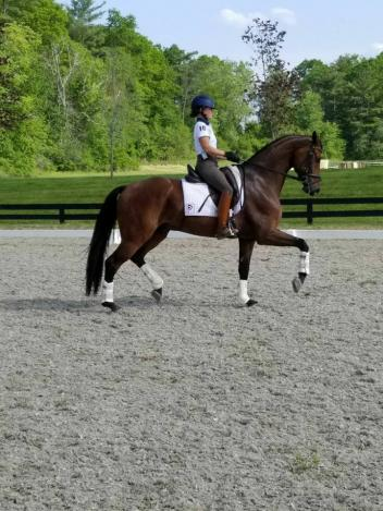 Grand Prix rider and a founding member of Performance Farms Katie Riley had a highly successful weekend at Centerline Events' HITS Dressage on the Hudson show aboard five-year-old Hanoverian gelding Sir Beckmann