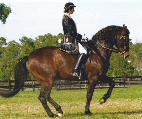 Bettina Drummond, founder of APAHA, with her Lusitano mare Granada du Plessis.