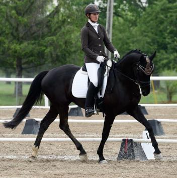 My Way RSW, owned by Theresa Schnell, debuts at Lamplight in the Five-Year-Old Division. (Photo: Theresa Schnell)