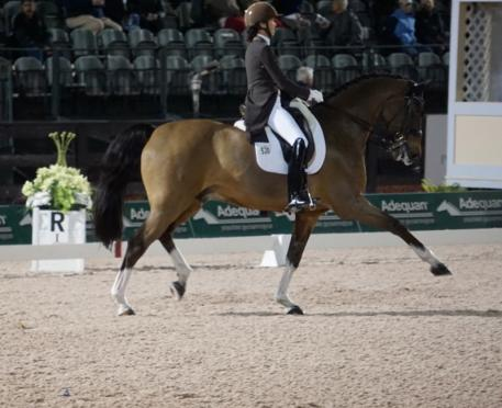PJ Rizvi and Breaking Dawn ompeting under the lights during week 3 at Adequan Global Dressage Festival