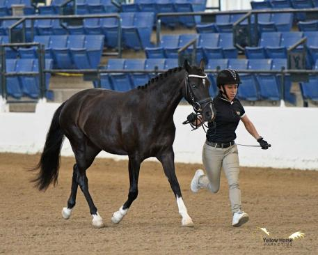 Ryann shows off her winning form in the National Dressage Pony Cup Dressage Sport Horse Breeding division.