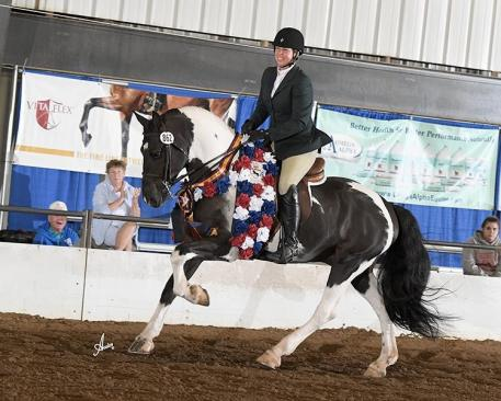Stafford and Dream Gait's Baefyre (Friesian Sport Horse gelding owned by Lynn Schmidt/Dream Gait Farm)