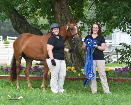 The NDPC Colt/Gelding Championship as well as the Young Pony Championship was earned by CGF Mischief Managed. Photo by Jennifer M. Keeler.
