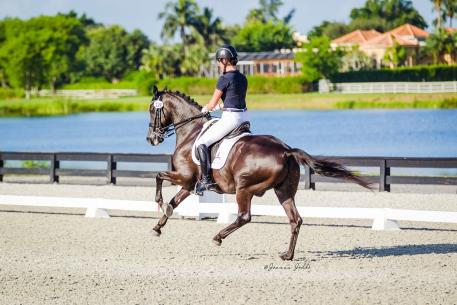Melissa Taylor and Ansgar soar to victory at the Gold Coast Made In The Shade Show. (Photo courtesy of Joanna Jodko Photography)