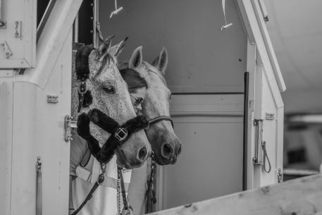 The world's largest commercial airlift of horses has begun ahead of the FEI World Equestrian Games™ Tryon 2018, with a total of 550 horses flying to the USA to join 270 horses coming overland to the Games, one of the biggest sporting events on US soil this year. (FEI/Dirk Caremans; FEI/Tori Repole)