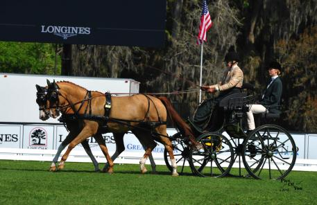 Boots Wright of Ocala, Florida and her German Riding Ponies took first place in the dressage phase with a score of 46.66 (Photo: PicsofYou.com)