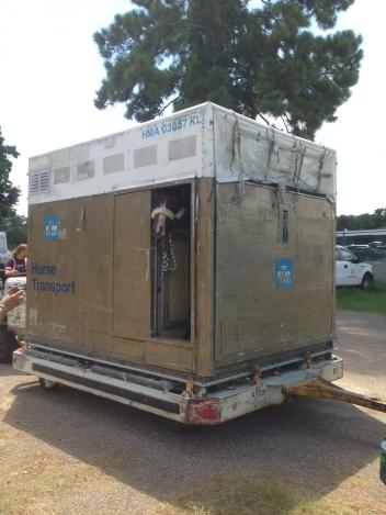 Custom Cash Advance peaks out of his shipping container in Houston, ready for the flight to Paris for the World Equestrian Games. Photo Courtesy of Silver Spurs Equine