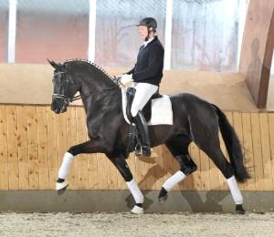Fantastic (Fuerst Romancier x Sandro Hit) – A1 Performance Sires