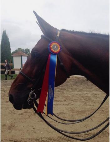 Helio Rouge with Tritschler's Region 1 Maclay Championship ribbon.