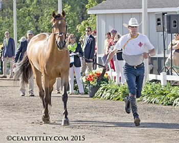 Ian Millar of Perth, ON, and Dixson, owned by Susan and Ariel Grange. (Photo © Cealy Tetley)