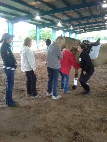Kathy Connelly doing ground work with students and horses