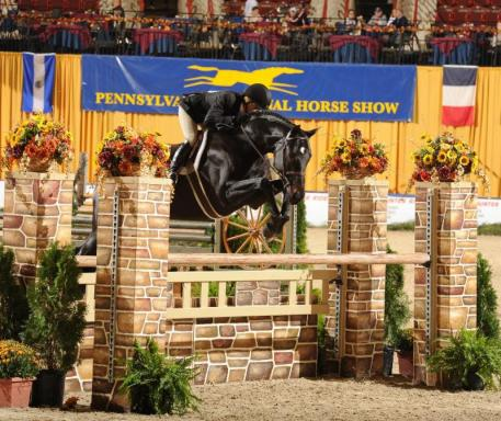 Mindful, ridden by Kellley Farmer, won the High Performance Working Hunter Championship (c) Al Cook - alcookphoto.com