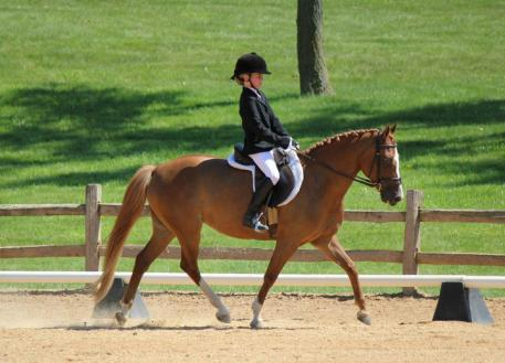 In the beginning, 8-year-old Sammie and Rohanna show Training Level. Photo: Suzanne Wepplo