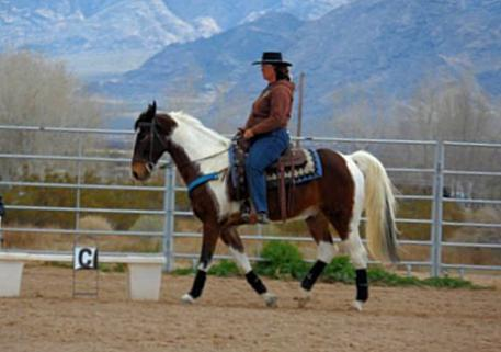 Sharon Fiato rides her gaited horse, Chip, in Sandy Valley's recent Western Dressage clinic. Sharon's goal is to further develop her partnership with Chip through classical horsemanship.