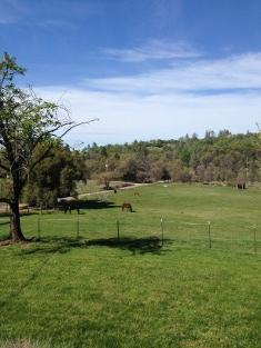 Tom Meyers' farm in Rough and Ready, California. (Photo: Courtesy Tom Meyers)