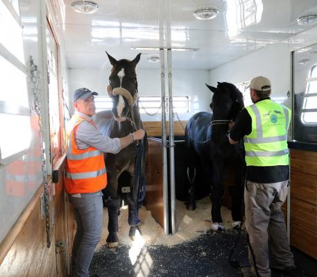 Reigning FEI World Cup Dressage champion Valegro and groom Alan Davies (left) shared travel accommodations with the stallion Painted Black (Photo: (c) Ken Braddick/Dressage-News.com)