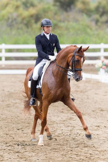 Zero Gravity will make his international Grand Prix debut with Olympic veteran Guenter Seidel at the Mid-Winter Dressage CDI. Photo: Terri Miller