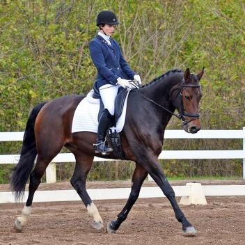 Bid on Aquila! A 16.3 hand Dutch gelding who won all three of his classes at the 2014 BLM Championships with scores to 75.4%.