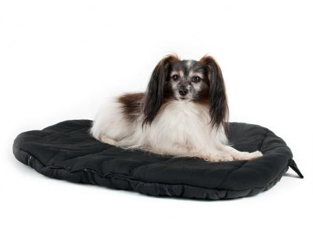 Convenient therapeutic travel bed to keep your dog (and reporters) comfortable while away from home.