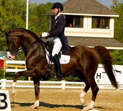 Palm Beach Equine's newest resident, Endel Ots shown here on Agastrofos winning Reserve National Champion in the 2012 Developing Horse Grand Prix  (photo cortesy of Endel Ots Dressage)