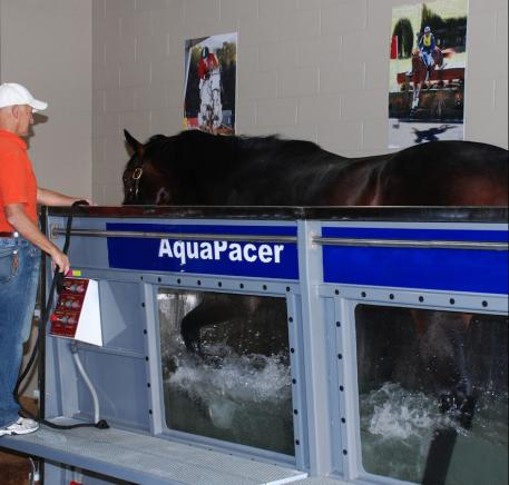 One of The Sanctuary's staff members works with a horse on the Aqua Pacer Treadmill.