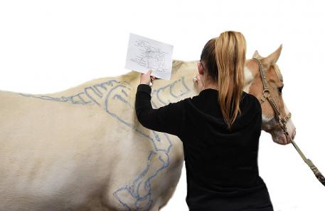Interactive Anatomy Clinic Hosted By Stafford Carriage Driving