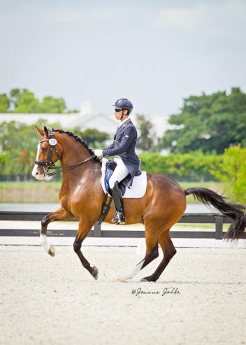 The Journey Begins -- Sahar Daniel Hirosh on Whitman Winning the Grand Prix at the Gold Coast Dressage Association Summer Solstice with a score of 70%