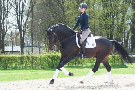 Auction rider Anna Peters already nicely engages her horse's hind legs. Now the next step for her is to work on straightness and achieve more independence from the inner rain. Domino Gold is a now 5-year old Hanoverian stallion by Diamond Hit/Likoto X.