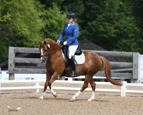At only 13.3 hands, Lauren Chumley of Pittstown, N.J. and Liam Carter Rowe's Welsh mare Sham's Chinaberry took home the Second Level Open Championship. Photo by Jennifer M. Keeler