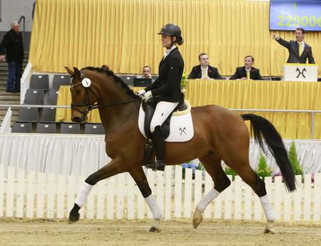 Belaggio, Verden, Auction, 2016, Hanoverian